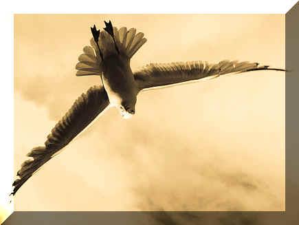 Oiseau (Gond de métal) dans OISEAUX oiseau_tibetain
